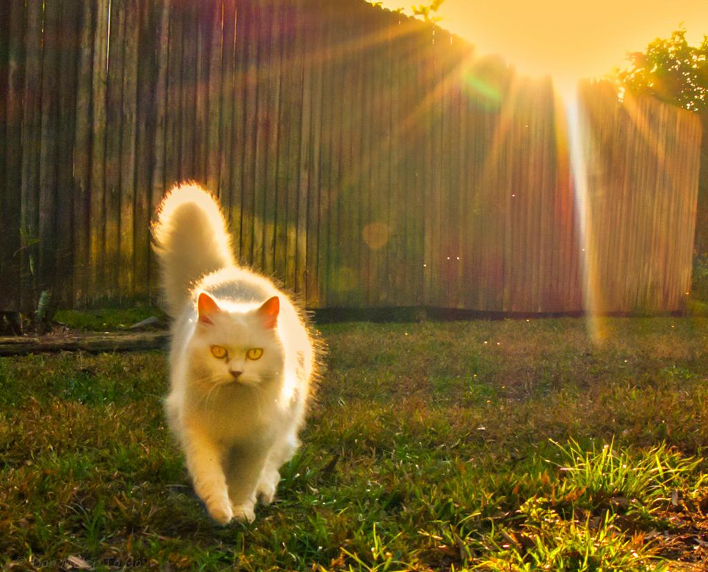 白猫とスター