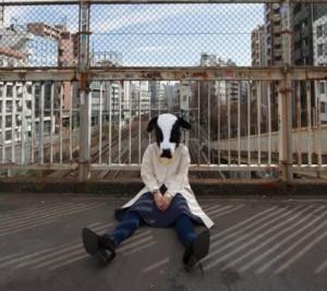 何かに失敗した牛